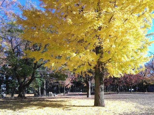 Asukayama Park, 1-1 Oji, Kita, Tokyo 114-0002, Japan