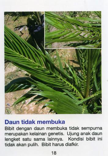 bibit daun kelapa sawit tidak membuka