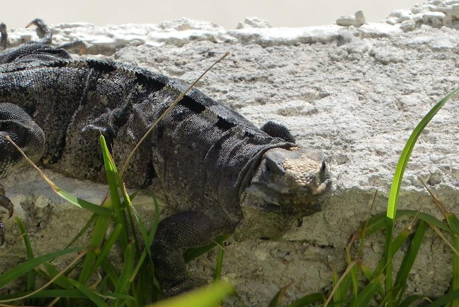 Etoiles du mexique Octobre-Novembre 2012 P1020420