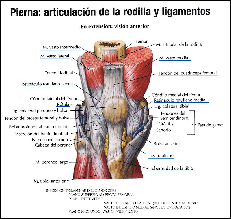 ESPACIO, AMOR Y LOCURA: Fractura de Rótula (I) - No Desplazada