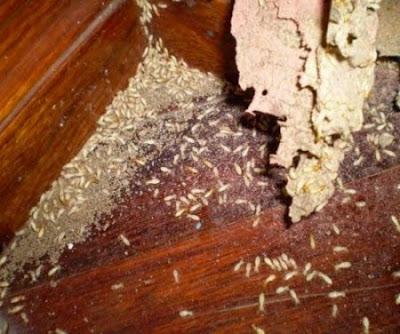 Phòng chống mối mọt cho đồ gỗ
