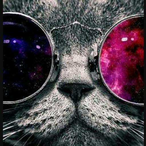 Eğlenceli Kedi