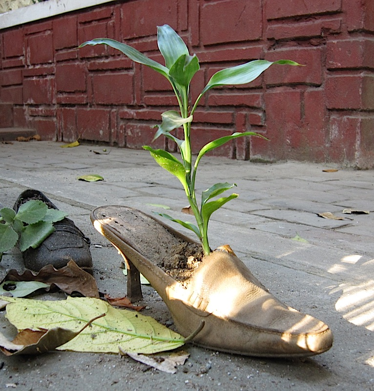 old shoe used as a planter at Resurrection Furniture and Found Objects Gallery