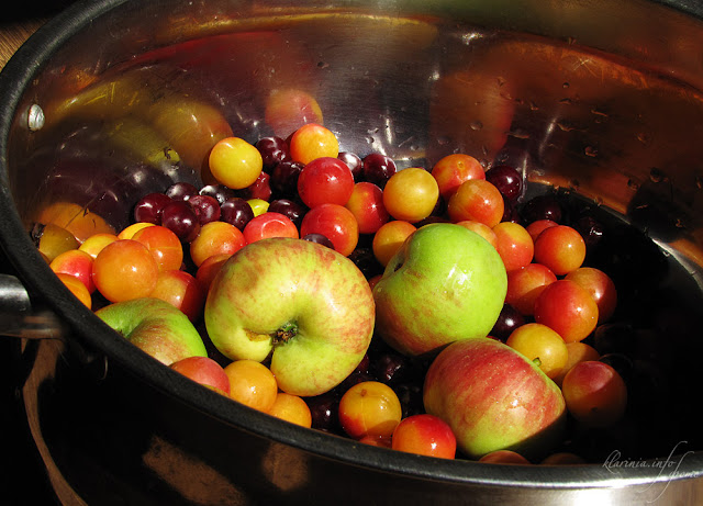 компот фото яблоки олча алча вишня