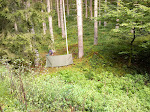Tolle Stelle direkt am Bach und trockenes Feuerholz in Augenhöhe an den Bäumen.