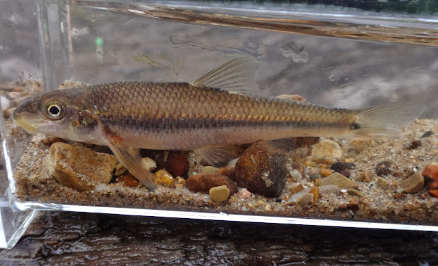 Ben Cantrell's fish species blog: September 2013