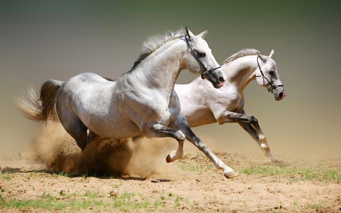 Best Wild Animal Photos of 2012 | animal wallpaper | animal big picture | animal Photography