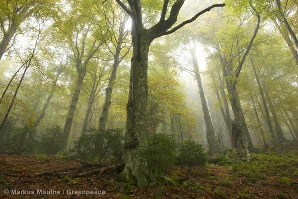 ต้นไม้, ป่าไม้