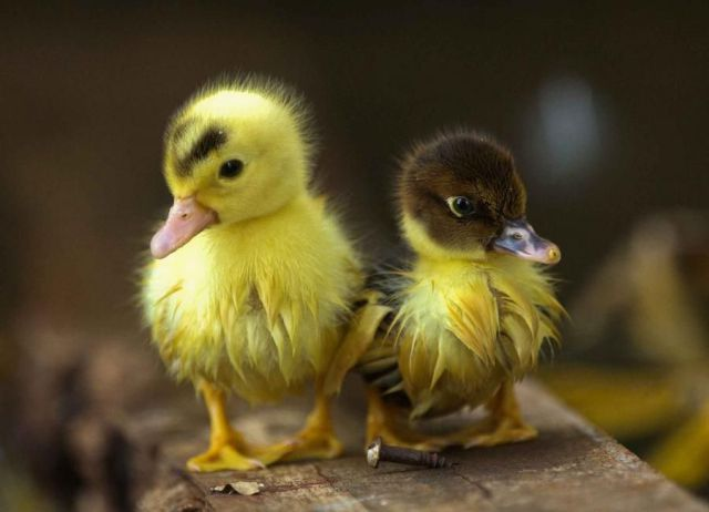 World's Most Cute And Funny Animals Seen On www.coolpicturegallery.us