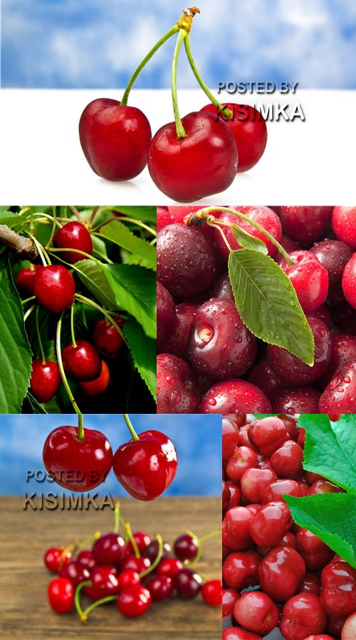 Stock Photo: Red sweet cherry