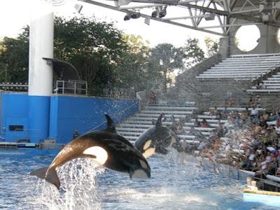 [Floride 2011 - Trip Report] WDW,DCL,USO,IOA,KSC,DC,BG,SW,ETC ... - Page 6 P5070461