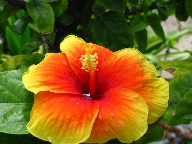 Из зимы в лето. Филиппины 2011 - Страница 5 IMG_0057