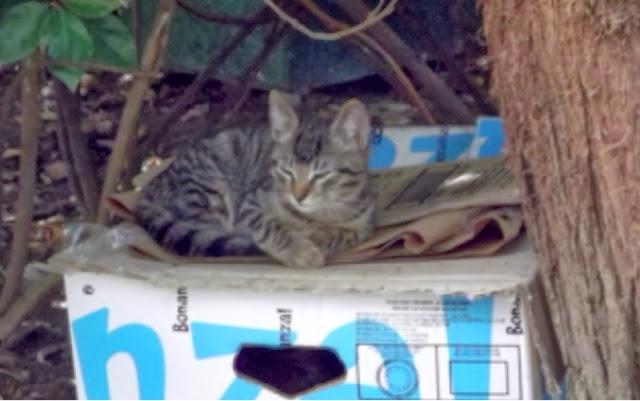 Tips Panduan Penjagaan Kesihatan Kucing Kesayangan Anda January 2014