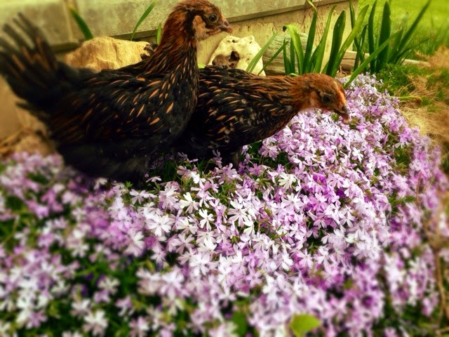 Flowers and Chicks