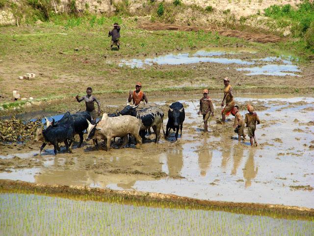 صور من مدغشقر Madagascar 14932179576