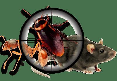 Kiểm soát côn trùng giá rẻ