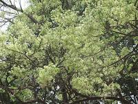 https://lh4.googleusercontent.com/-WEvF35QevhU/T4VJluVoAzI/AAAAAAAAAUA/DK8ABAWeOuQ/s1600/ZZ+Unknown+087+Tree+-+0005.jpg
