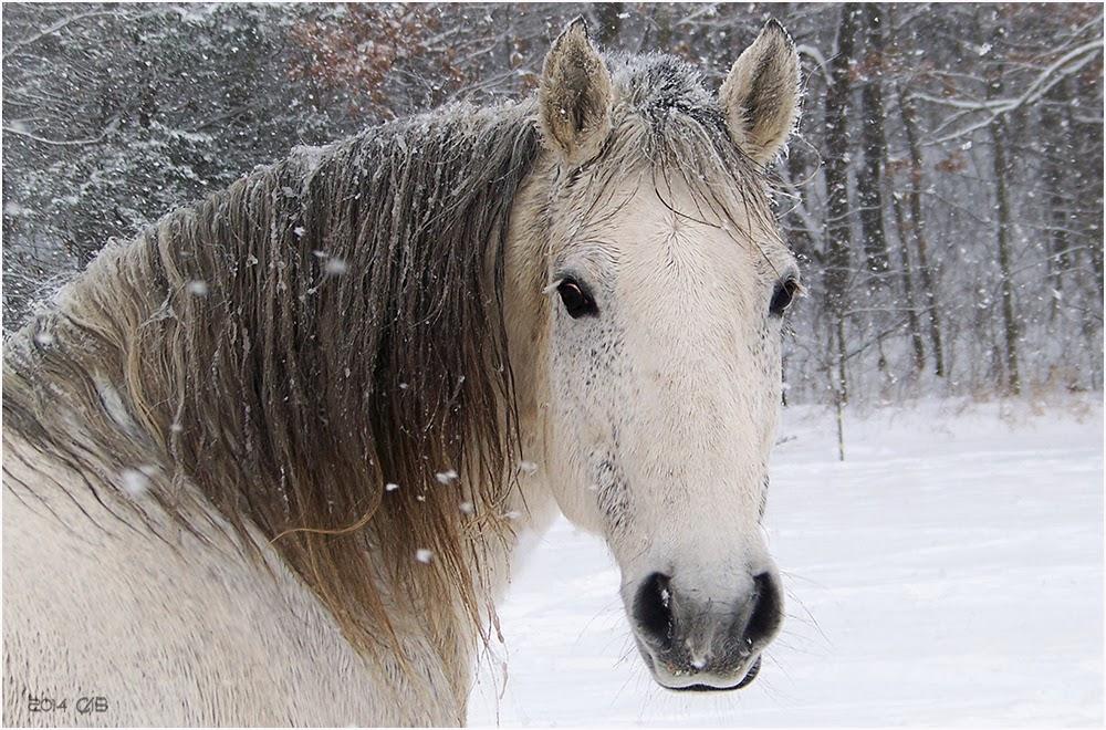 cheval wallpaper hd 1 - photo #27