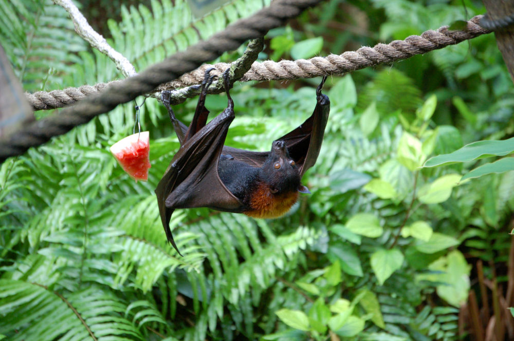 Plowing Through Life Today S Trivia Bats
