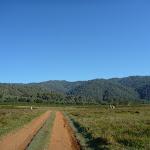 Walking along Behrs Flat (292522)