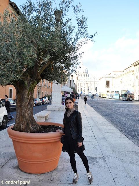Roma. Maslini