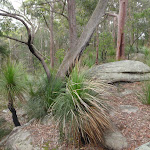 Grass trees and rocks dominate the ridge (228463)