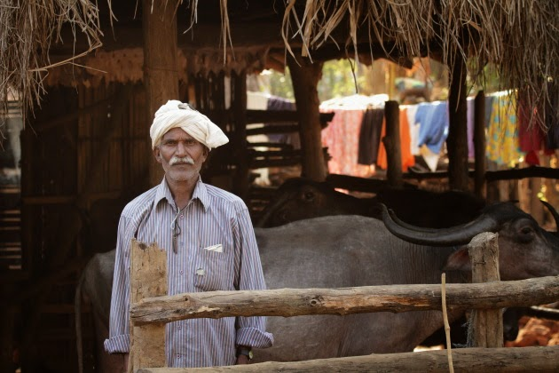 Gowli man with his cattle at a village near Dandeli
