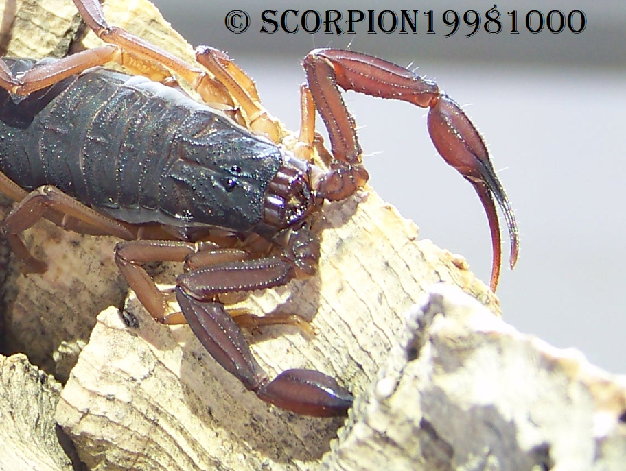 This forum is in dire need of scorpification! 6