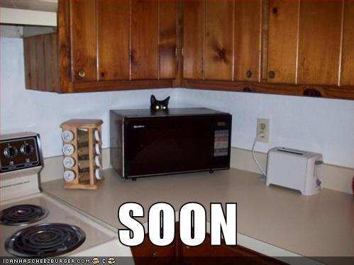 photo of a cat looking out over a microwave