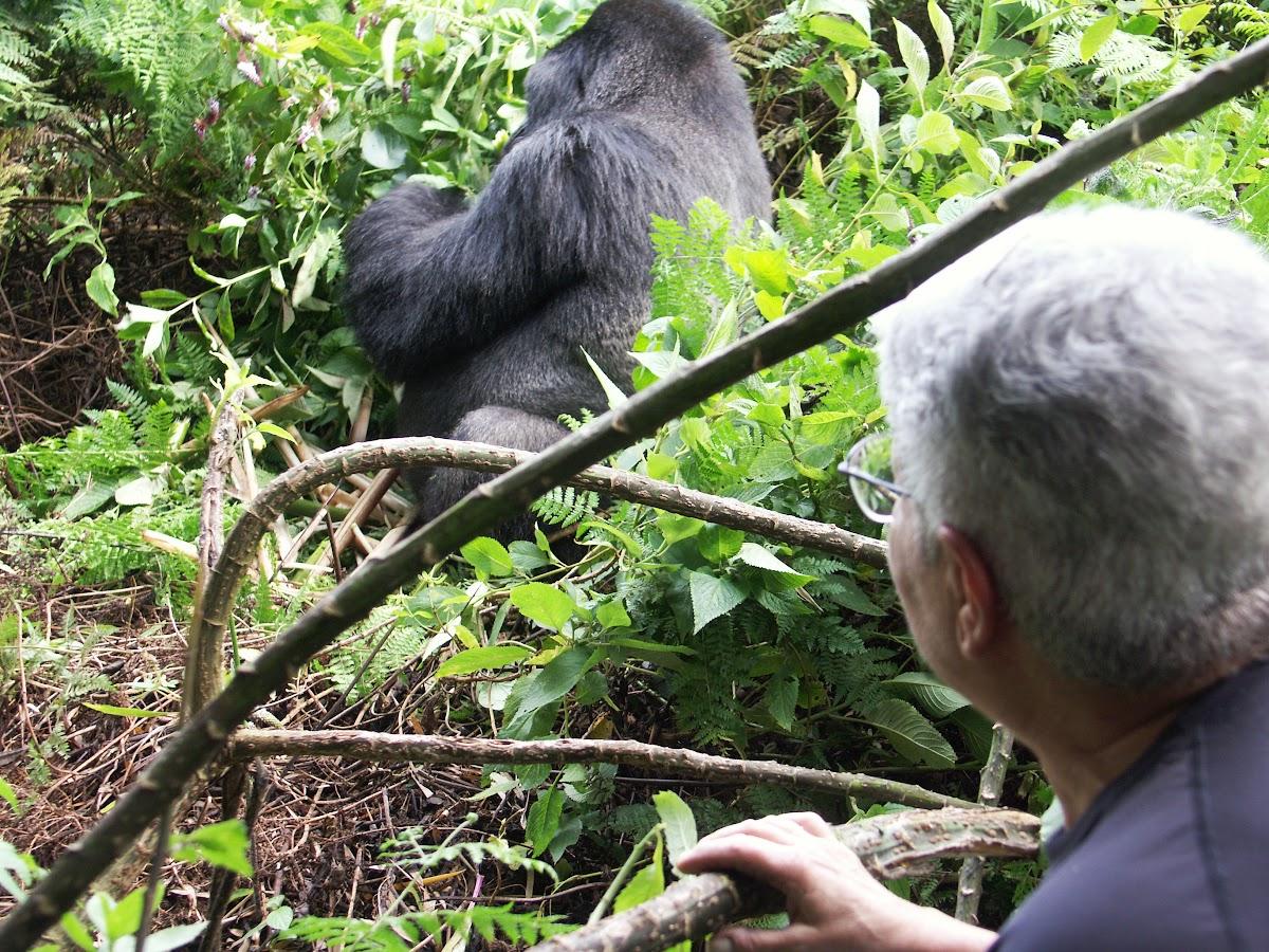 Michele watching the gorilla
