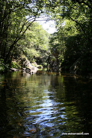 Remanso del río