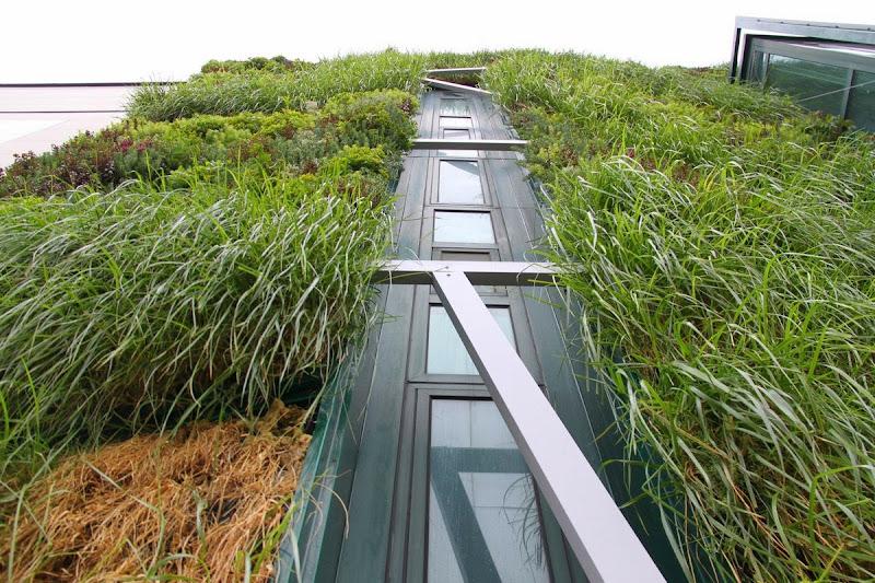 jardín vertical Vitoria-Gasteiz - Vista de gramíneas