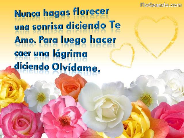 Nunca hagas florecer…