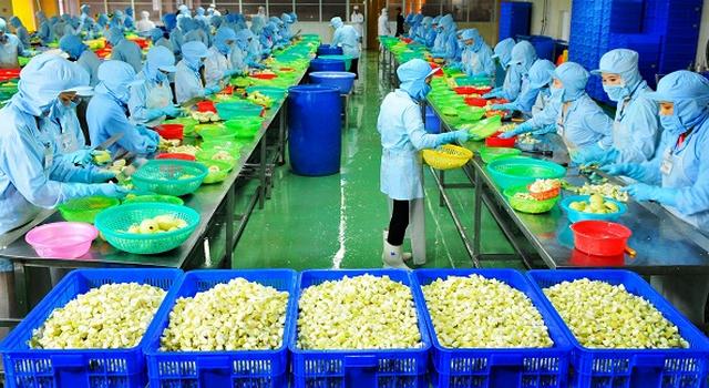 Đơn hàng chế biến thực phẩm cần 24 nữ làm việc tại Hokkaido Nhật Bản tháng 08/2017