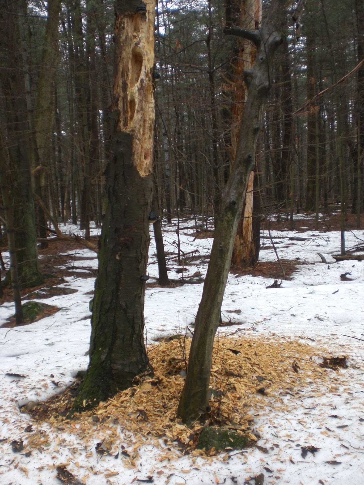 Woods Walks and Wildlife: March 2011