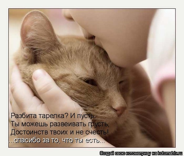 Интересные факты о котах