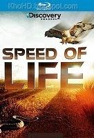Speed Of Life - Chậm là chết