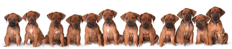 gefeliciteerd hondenliefhebber