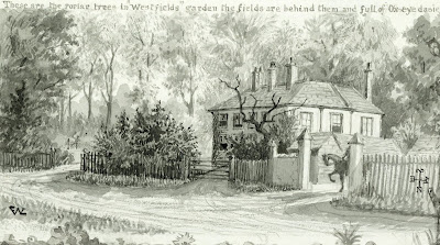 """These are the poplar trees in Westfields garden."" From A Record of Shelford Parva by Fanny Wale P17"