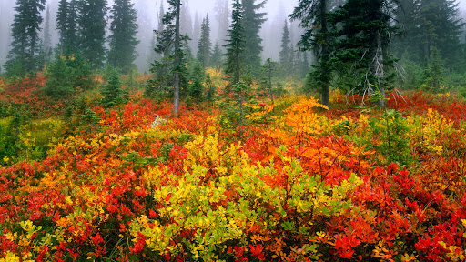 Misty Morning on Mount Rainier in Autumn, Washington.jpg