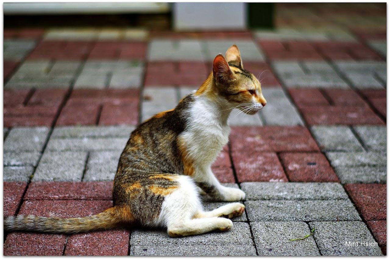 桐  花  、  黃  金  雨  與  貓(  1  3  P)