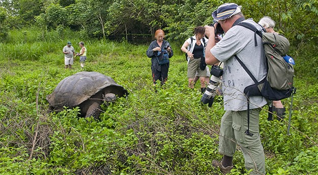 San Cristobal - Tortoises Surbound