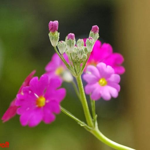 Geetanjali Patil Photo 11