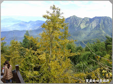 銀杏森林-銀杏、高山、遠霧