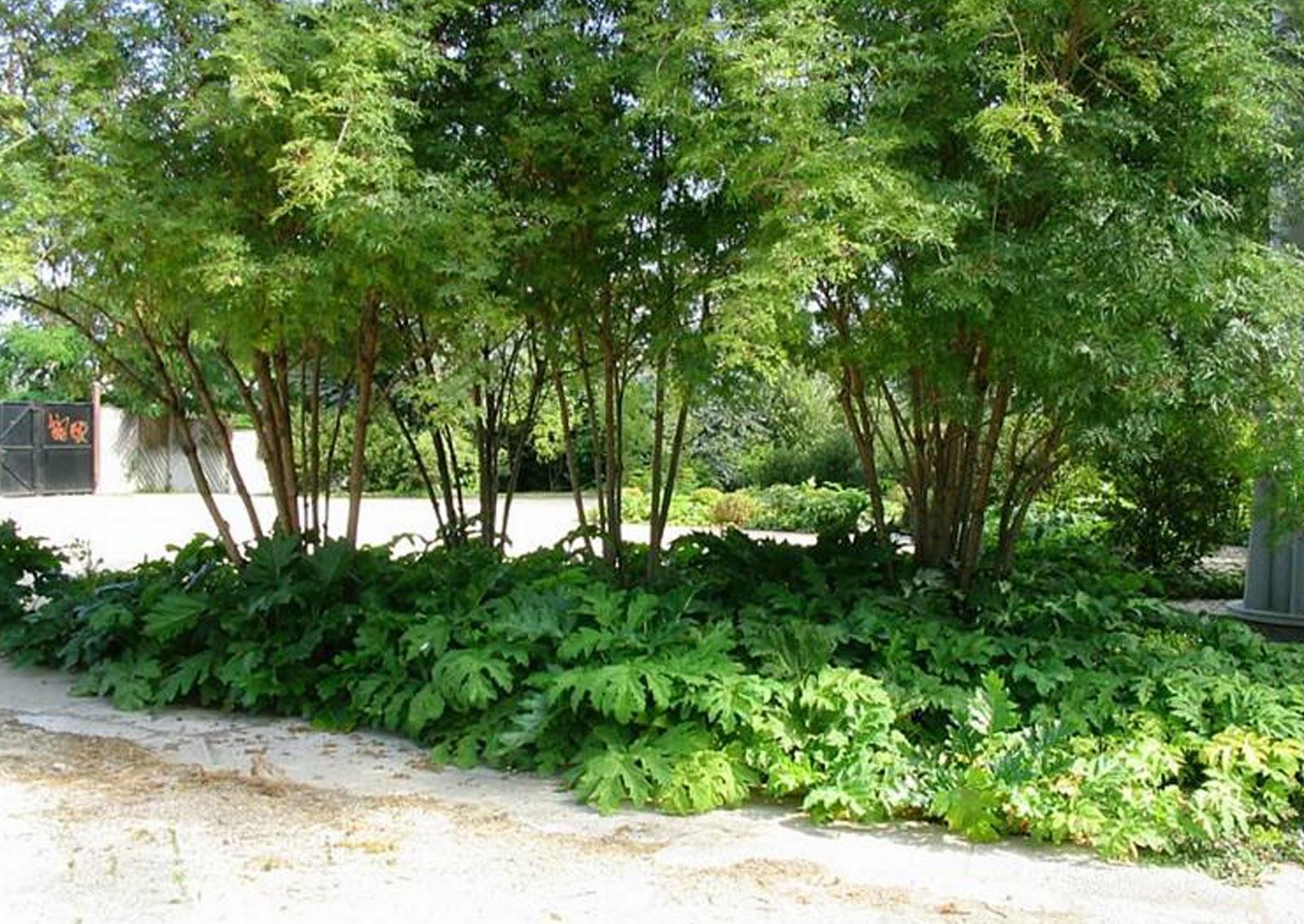 adele s blog ba garden design 3rd year multi. Black Bedroom Furniture Sets. Home Design Ideas