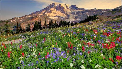 Paradise, Mount Rainier, Washington.jpg