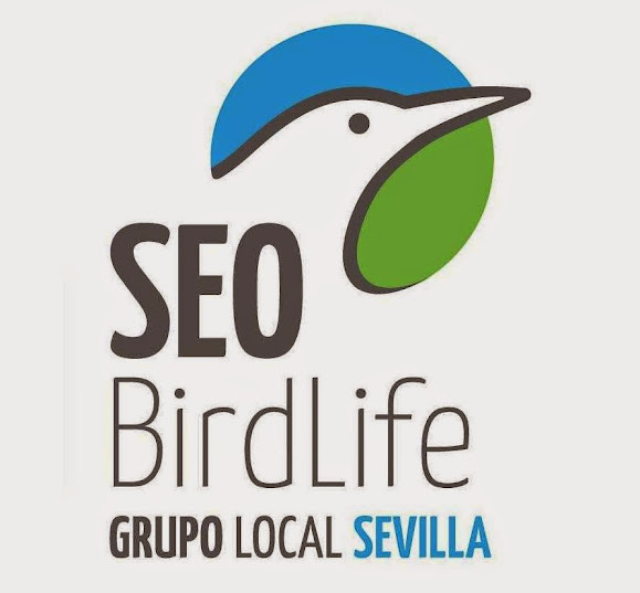 Grupo Local SEO Sevilla