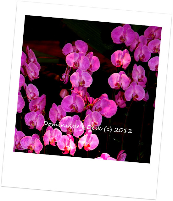 Pink and Purple Orchid Galore