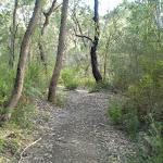 Bush in Berowra Creek valley (6100)