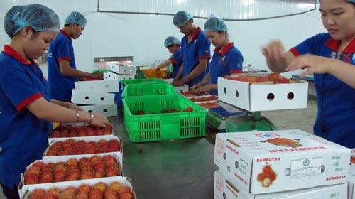 Đơn hàng chế biến thực phẩm cần 12 nữ làm việc tại Tokushima Nhật Bản tháng 07/2017